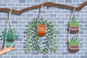 Hanging Planters | CrunchyTales